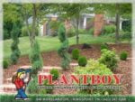 Plantboy Landscape Management Inc.